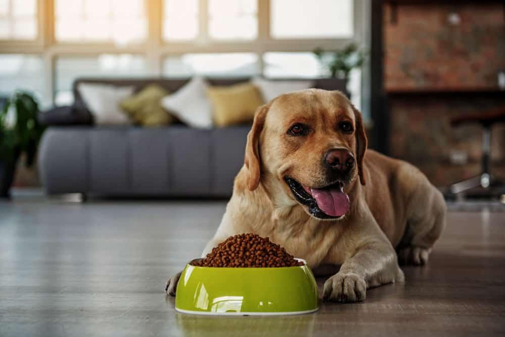 Best Vegan Dog food Brands to trust