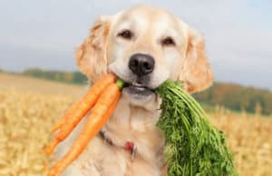 Effect of Vegan food on Dogs