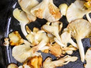 blue oyster mushroom recipes