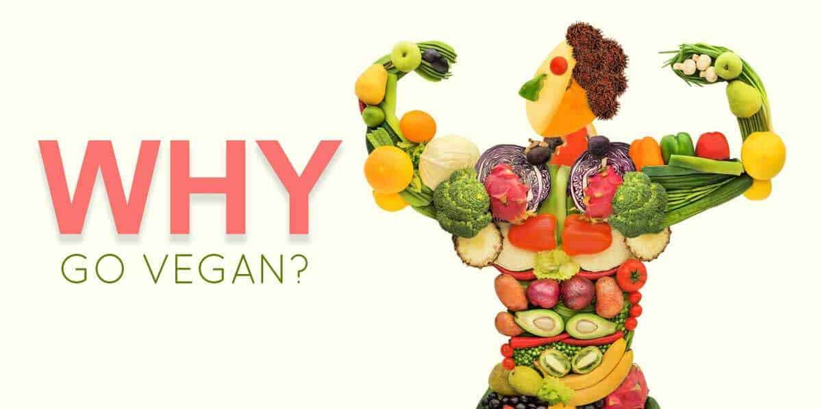 Why GO VEGAN or should i be vegan