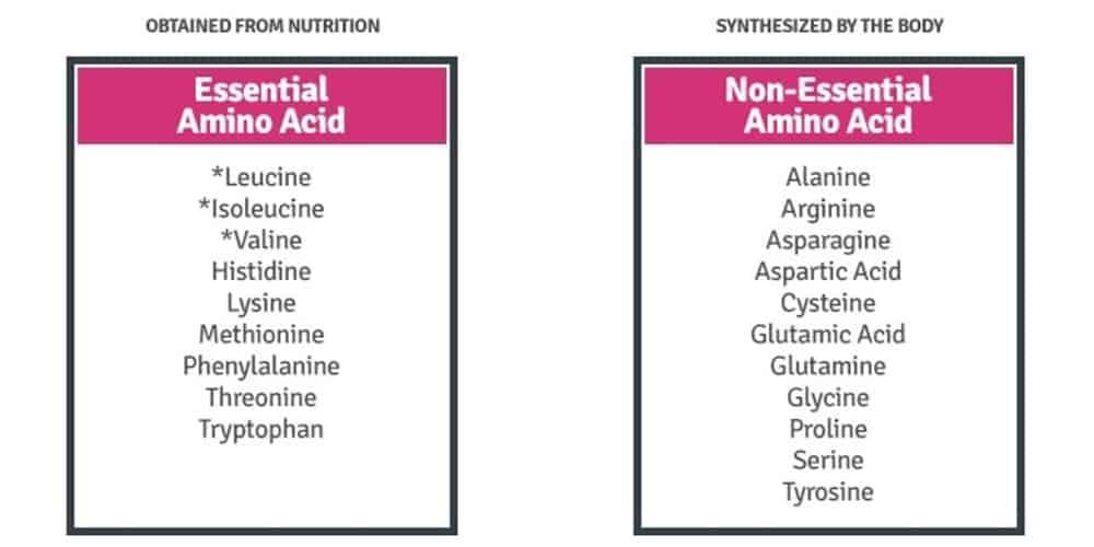 Is Seitan A Complete Protein?   Seitan Amino Acid Profile
