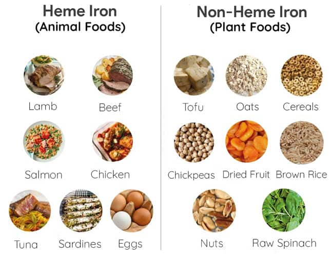 Heme Iron Vs. Non-Heme Iron