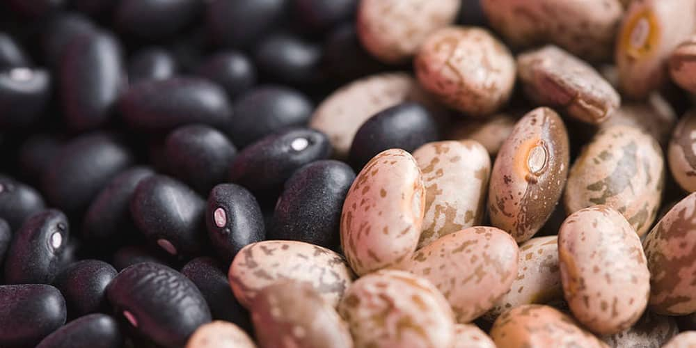 Appearance of Black and Pinto Beans