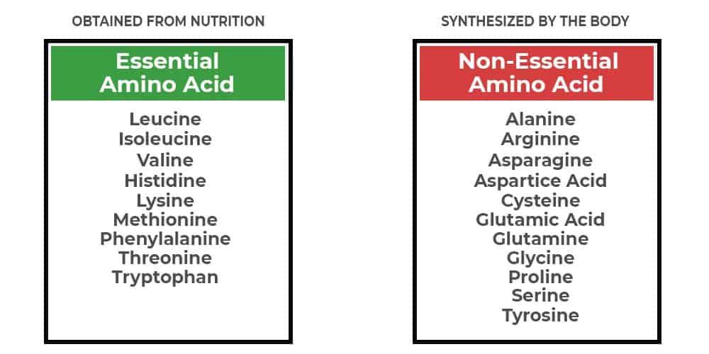 Essential and Non-Essential Amino Acids