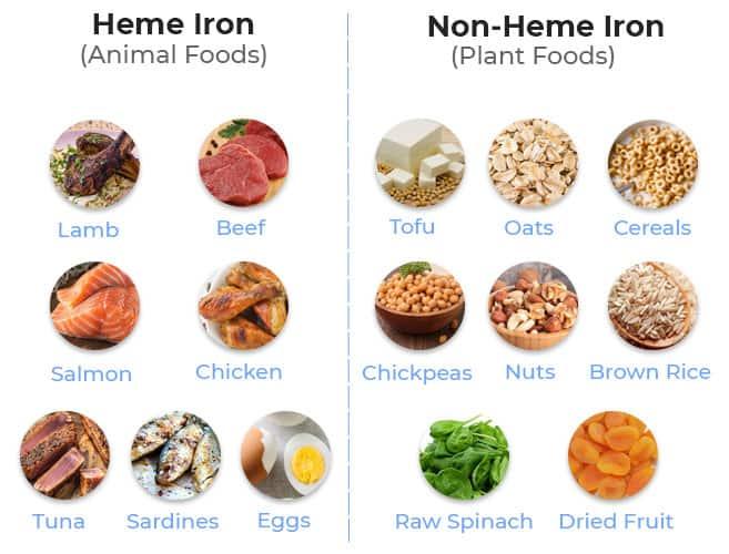 Heme Iron vs Non Heme Iron
