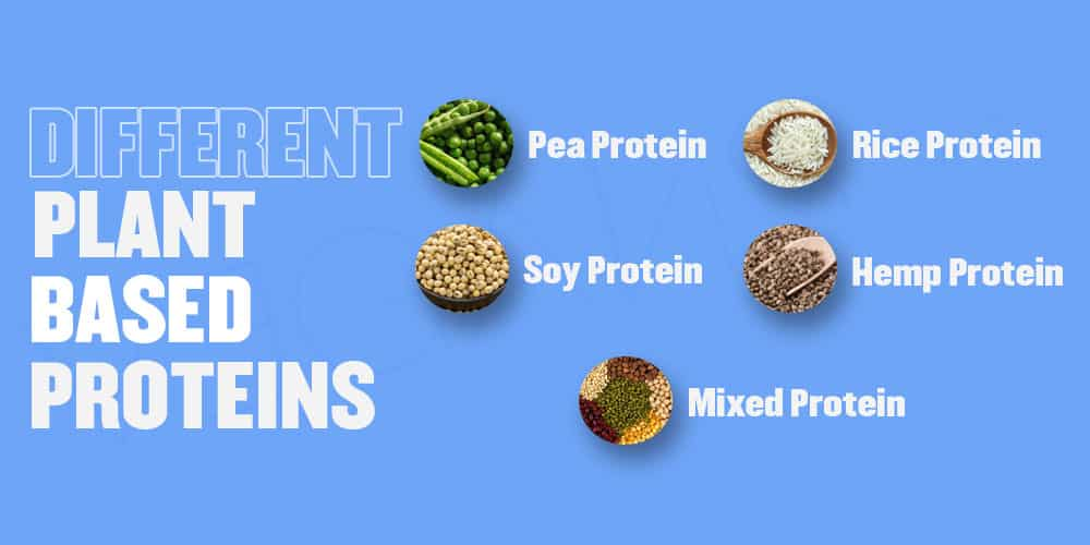 Different Plant-based Proteins