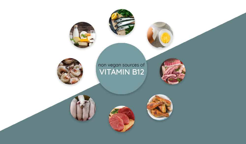 Sources of Vitamin B12 for Non Vegans
