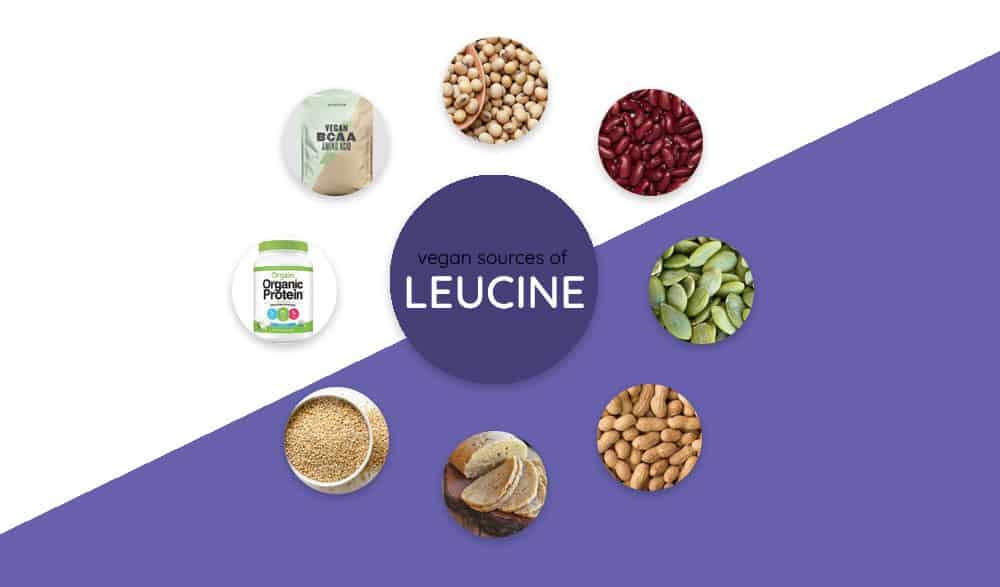 Vegan Sources of Leucine